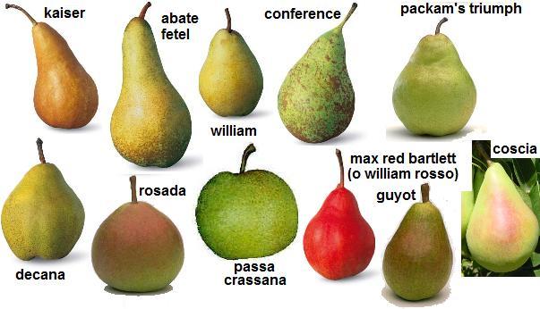 principali varietà di pere
